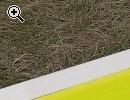 Nurflügler: Queen Bee motorisiert - Vorschaubild 1